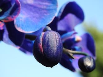 Purple Orchid Flower - Macro #7