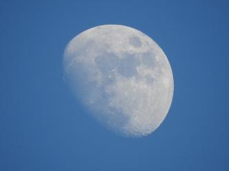 Moon - 1-19-2016