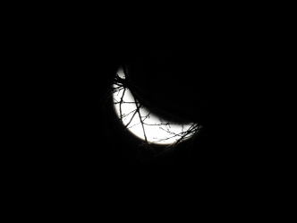 Moonlight On Tree Branches 1-5-2016 #2